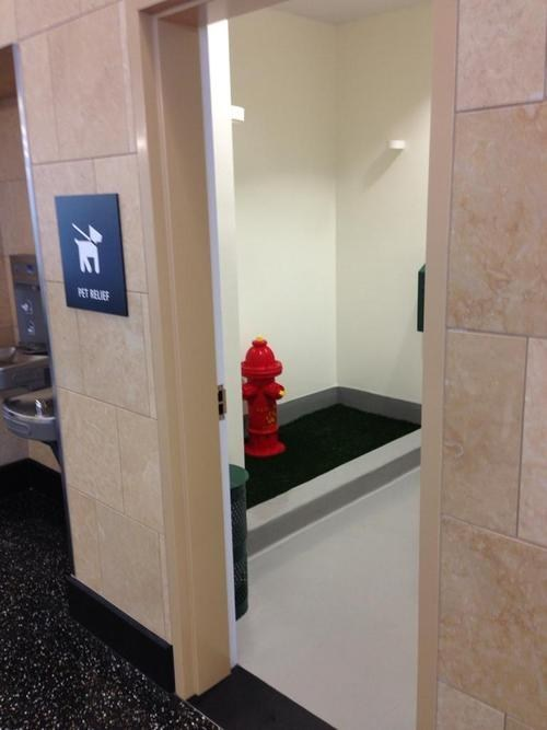 This Airport Has a Bathroom for Dogs