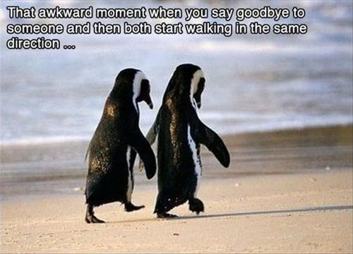 Awkward penguins