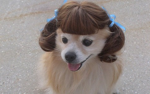 dogs with wigs - Hair