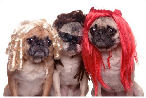 dogs,wigs,funny