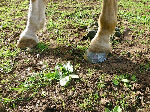 horse shoes horses duct tape funny - 7579740160
