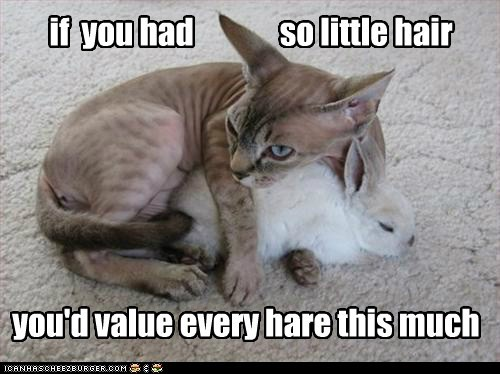 hair cat hare funny - 7579744512