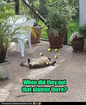 When did they put that planter there? * * * * *