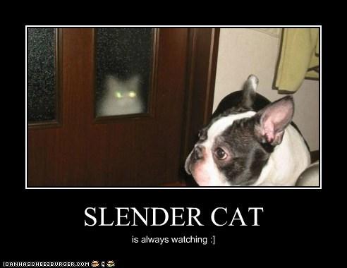 SLENDER CAT is always watching :]