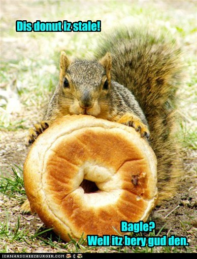 donuts stale squirrel funny bagle - 7581338624