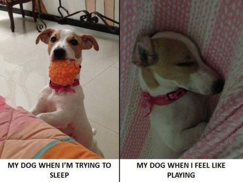 every time sleep play dogs funny - 7581921536