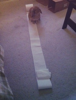 toilet paper proud bunny funny - 7581931264