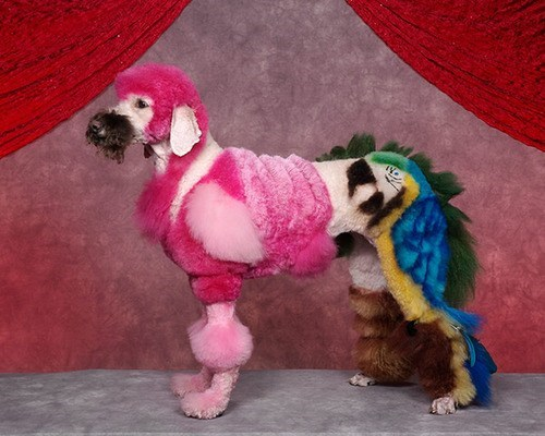 dogs wtf birds funny - 7582135040