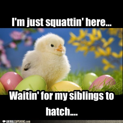 chicken siblings eggs cute funny - 7582402816