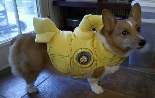 costume,yellow submarine,cute,corgi