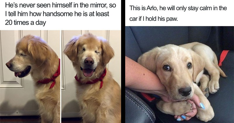 cute wholesome dog memes