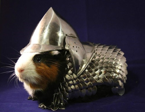 pets guinea pigs cute armor DIY animals g rated win - 7582510080