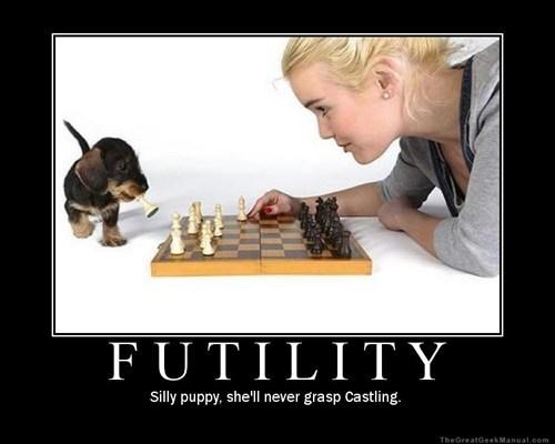 puppy futility chess funny - 7582527744