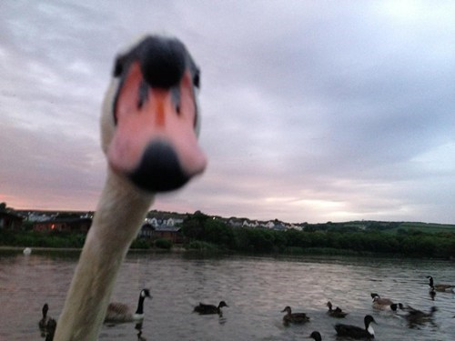 photobomb birds funny - 7583039488