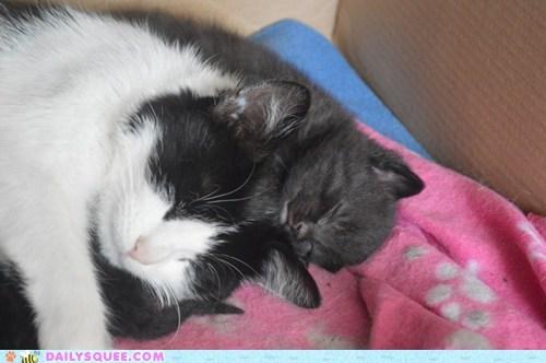 kitten sweet dreams Cats - 7585478400
