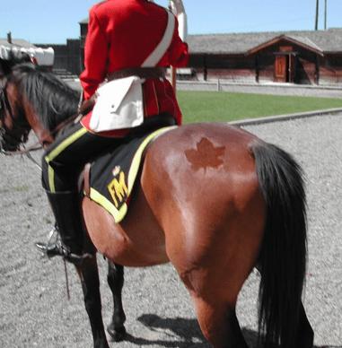 Canada IRL horses cutie marks - 7585514240