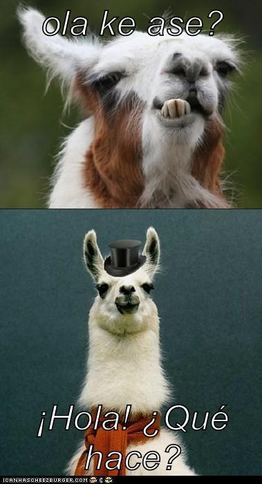 bromas Memes animales - 7585713920