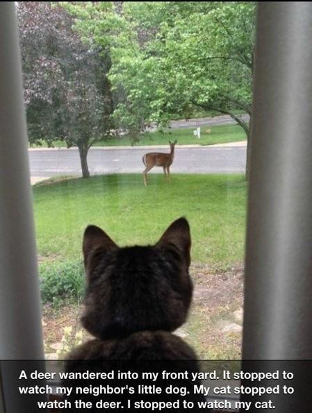 deer watching funny - 7585836800