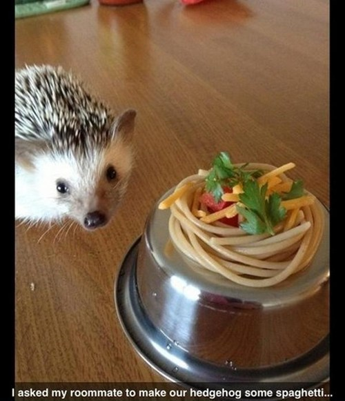 presentation pasta hedgehog food noms