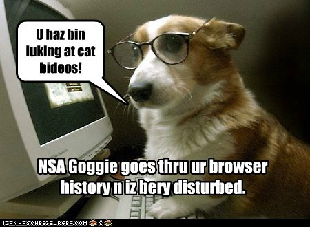 NSA Goggie goes thru ur browser history n iz bery disturbed. U haz bin luking at cat bideos!
