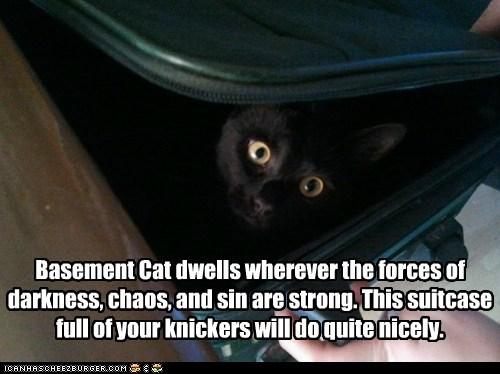 basement cat secret suitcase funny - 7586071808
