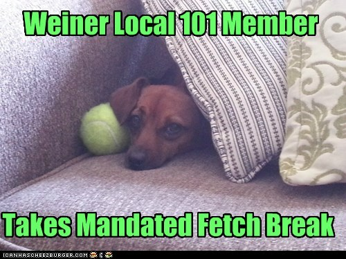 Weiner Local 101 Member Takes Mandated Fetch Break