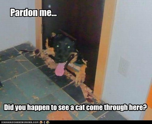 Pardon me... Did you happen to see a cat come through here?