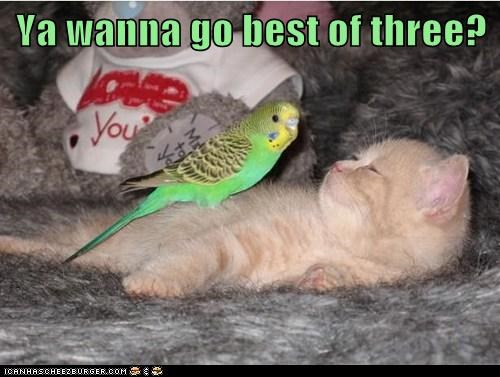 Cheezburger Image 7586665216