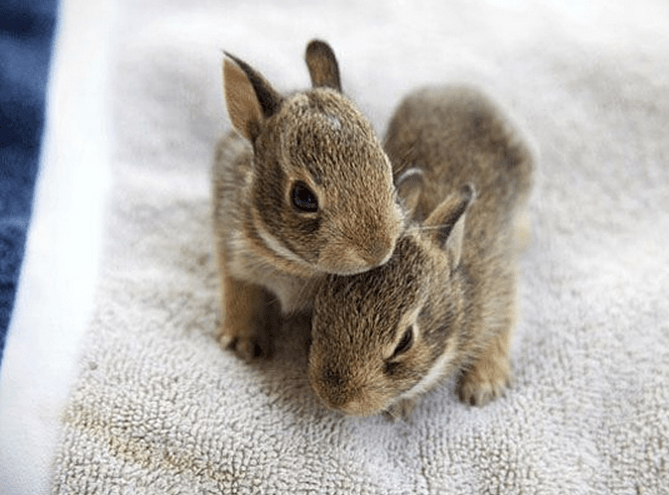 bunnies,adorable,list