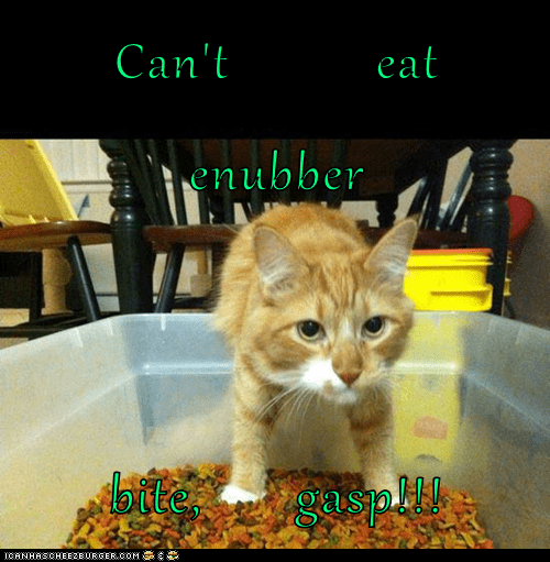 Cheezburger Image 7586726912