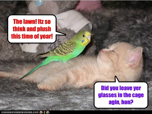 Cheezburger Image 7587043328
