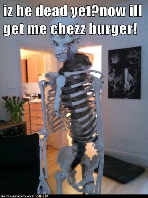 Cheezburger Image 7587123968