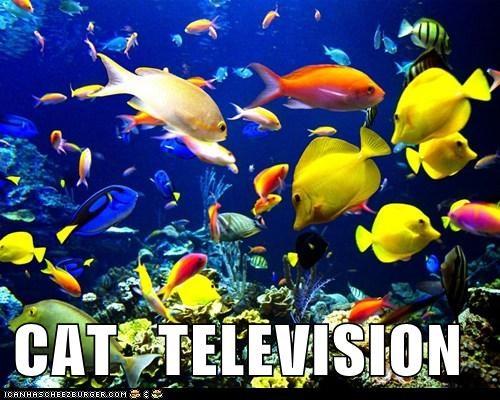 aquarium fish Cats funny television - 7587183104