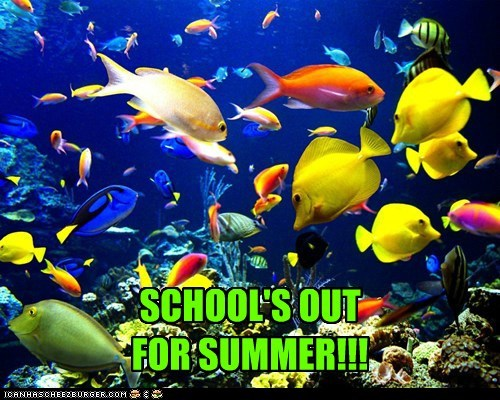 school,pun,summer,funny