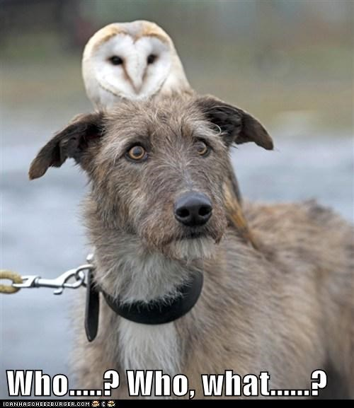 Owl who funny - 7587696640