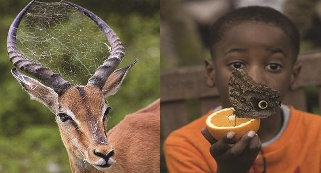 nature animal photos amazing photos animals - 7587845