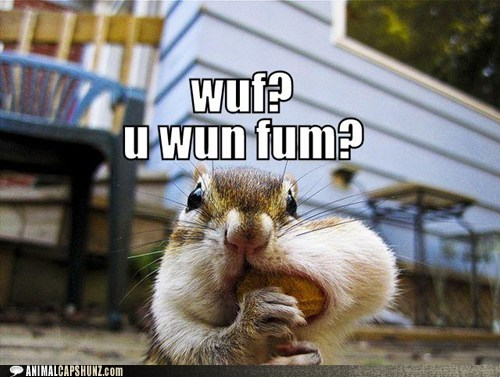 sharing squirrel mouth full funny - 7588532480