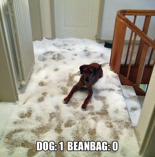 destructive mess beanbag funny - 7588765440