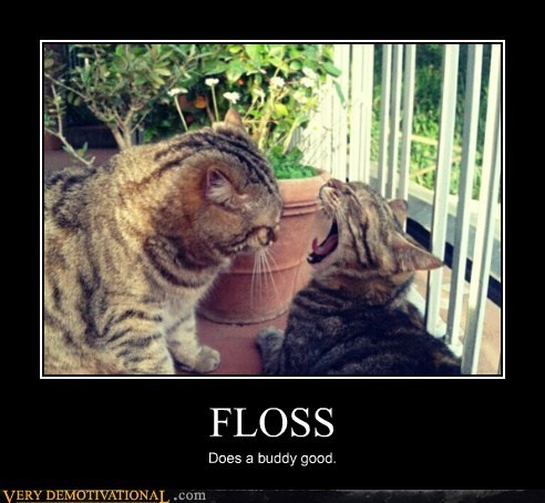 mouth Cats funny floss - 7589018880