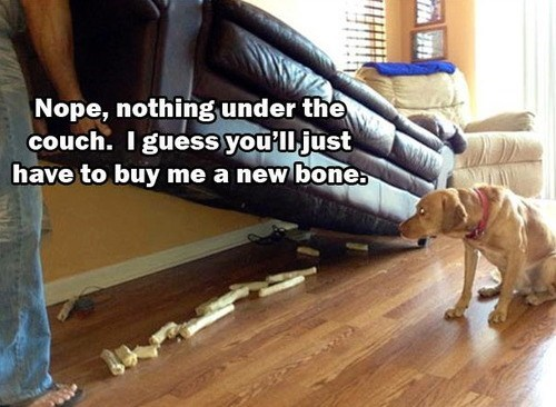 bone,couch,hoarder,funny
