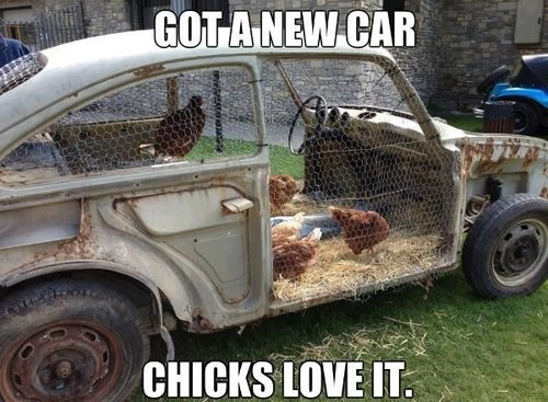 thrift shop puns chickens funny - 7589481728
