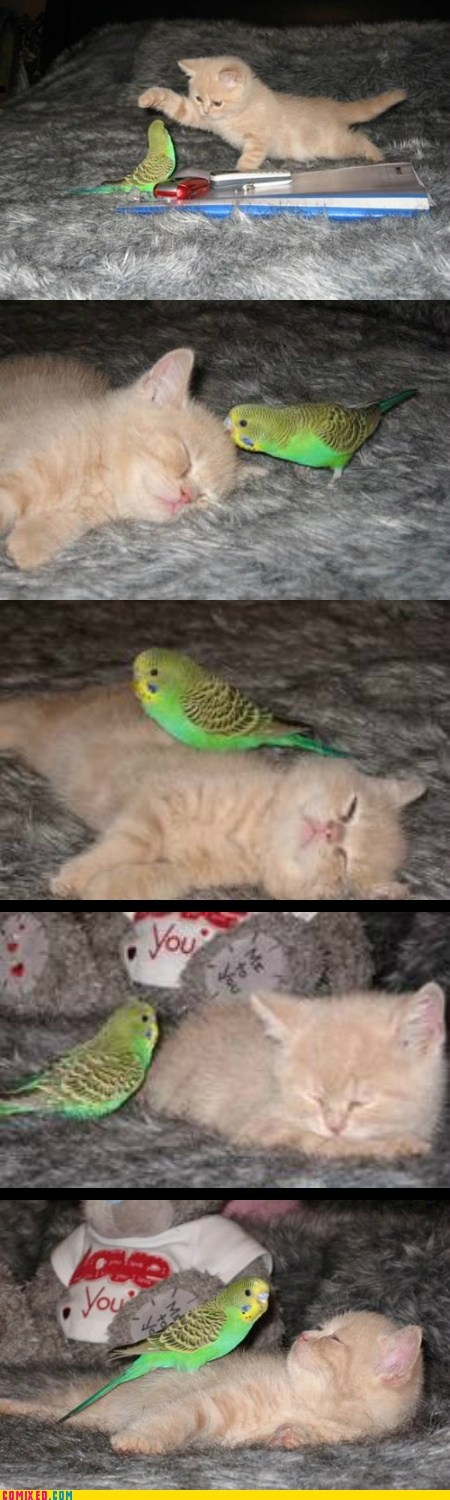 Cheezburger Image 7589581312