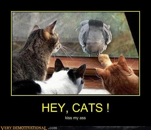 pigeon jerks Cats funny - 7589608960