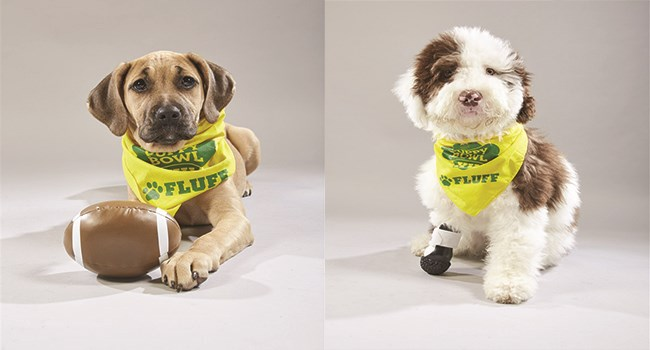 dogs adorable puppy super bowl puppies Puppy Bowl cute doggos - 7590405