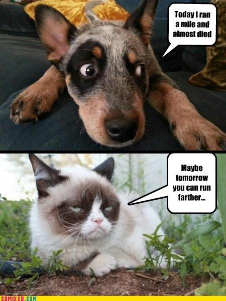 Grumpy Cat life hacks running funny - 7590992384