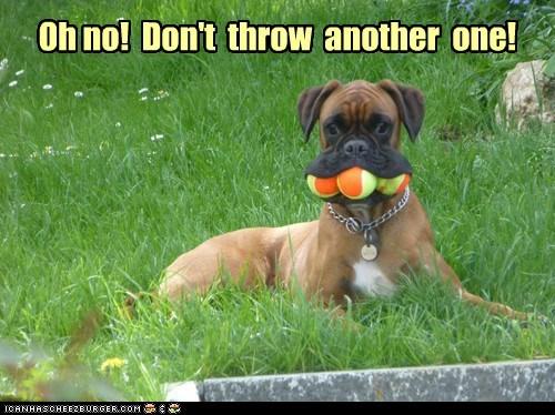 fetch balls funny - 7591075840