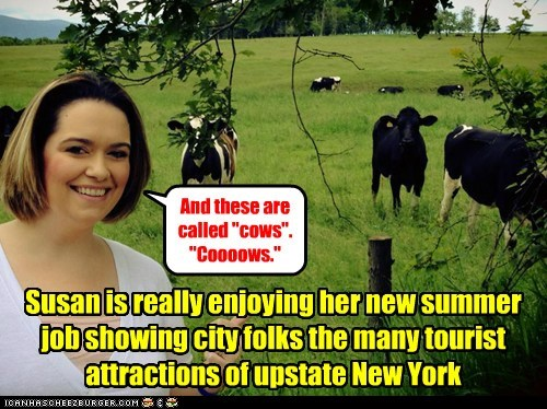 city folk new york funny cows - 7591283968