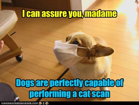 I can assure you, madame Dogs are perfectly capable of performing a cat scan