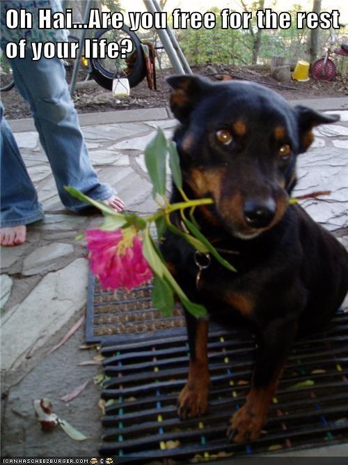 charmer cute Flower - 7591551488