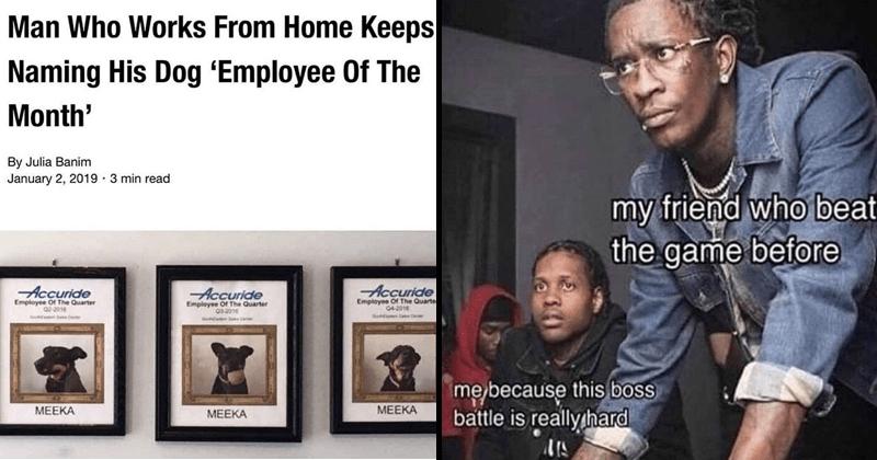 Wholesome memes, dog memes, cat memes.